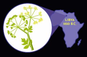 Birth Control Throughout History - Siphilum Plant